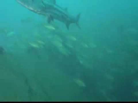 Fantastico Shipwreck